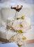Κτήματα Γάμου VENUS EPAVLIS Αφίδνες